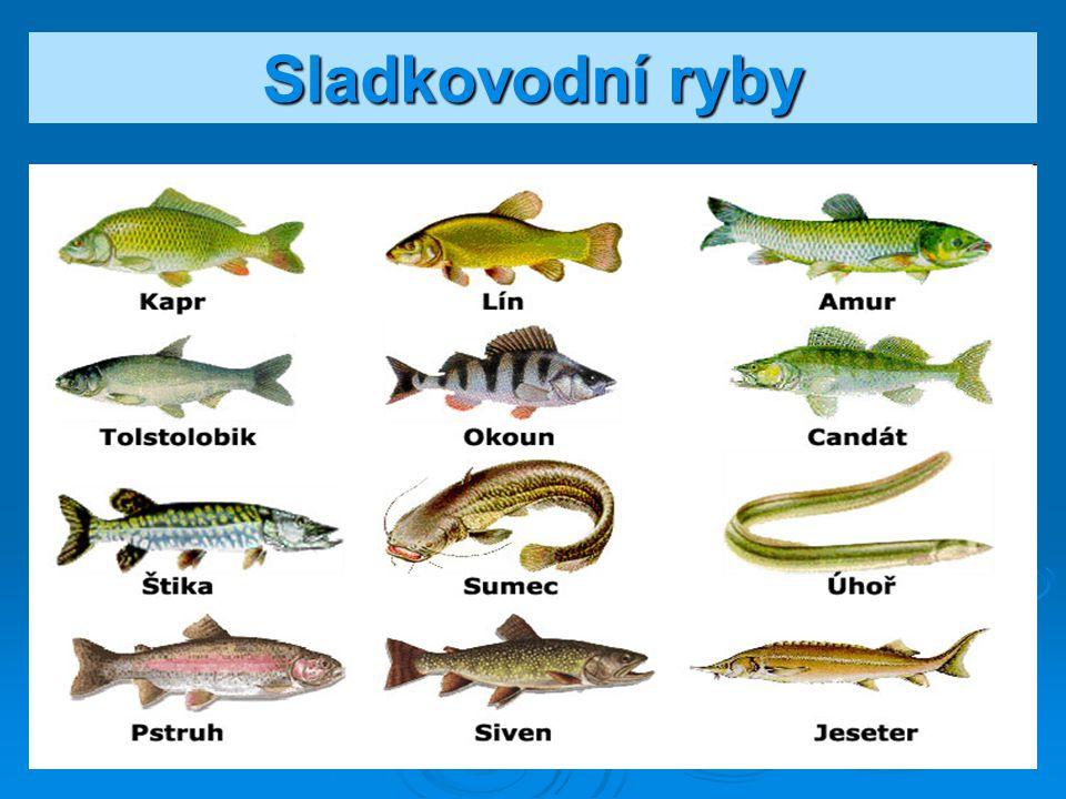 Naše dravé ryby
