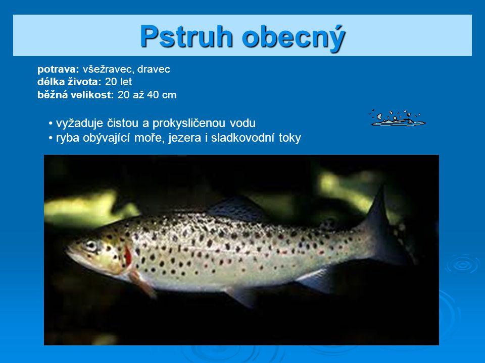 Štika obecná potrava: dravec délka života: 15 let běžná velikost: 40 až 70 cm loví ve stojatých vodách rychle roste a je schopna lovit i značně velkou kořist.