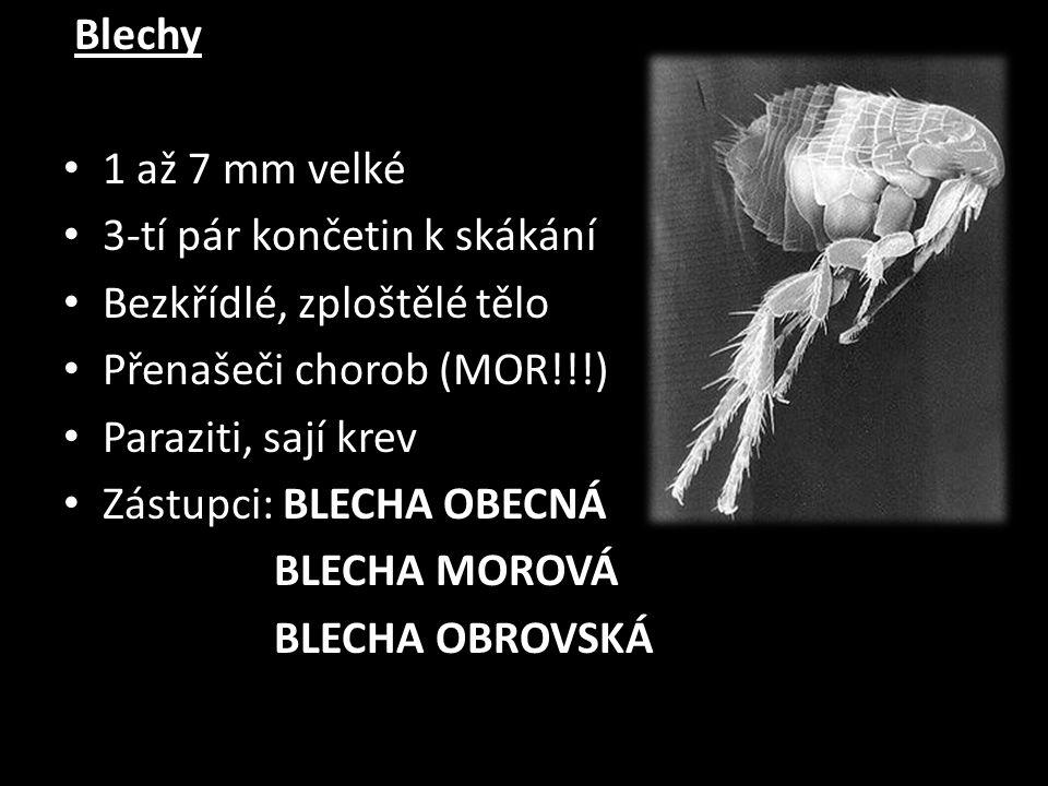 Blechy 1 až 7 mm velké 3-tí pár končetin k skákání Bezkřídlé, zploštělé tělo Přenašeči chorob (MOR!!!) Paraziti, sají krev Zástupci: BLECHA OBECNÁ BLE