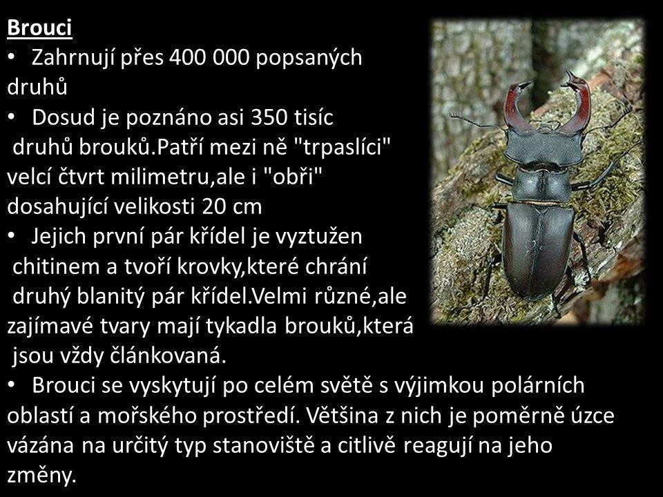 Brouci Zahrnují přes 400 000 popsaných druhů Dosud je poznáno asi 350 tisíc druhů brouků.Patří mezi ně