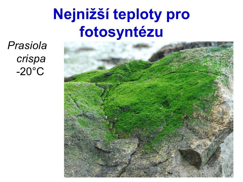 Nejnižší teploty pro fotosyntézu Prasiola crispa -20°C