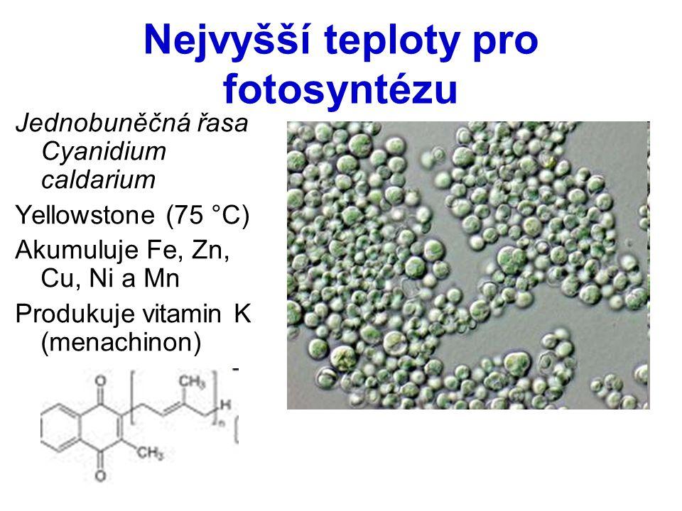 Nejvyšší teploty pro fotosyntézu Jednobuněčná řasa Cyanidium caldarium Yellowstone (75 °C) Akumuluje Fe, Zn, Cu, Ni a Mn Produkuje vitamin K (menachin