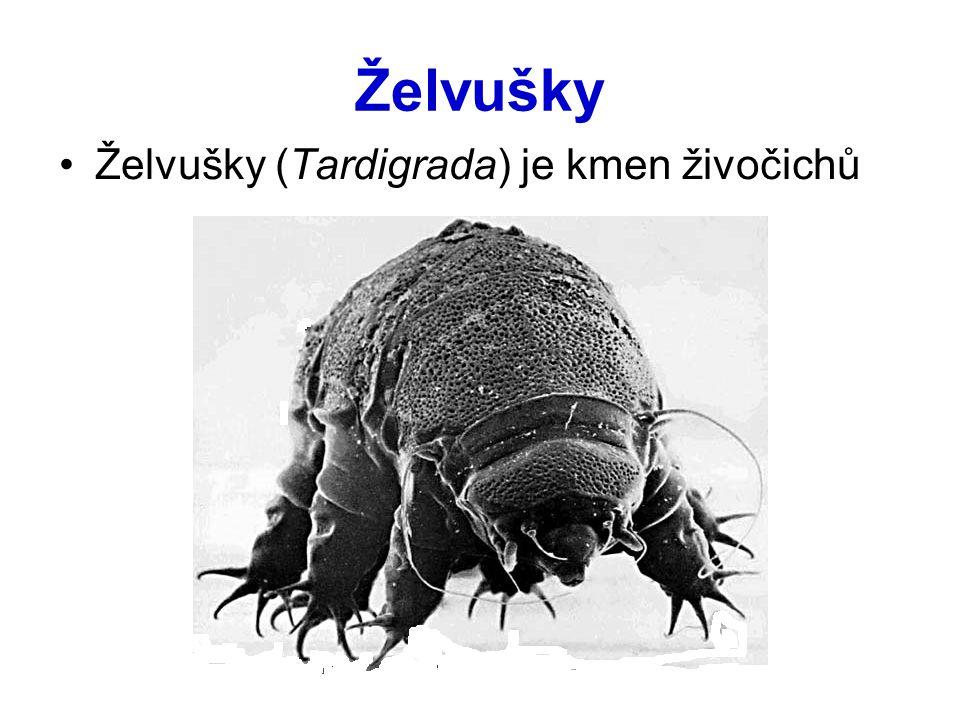 Želvušky Želvušky (Tardigrada) je kmen živočichů