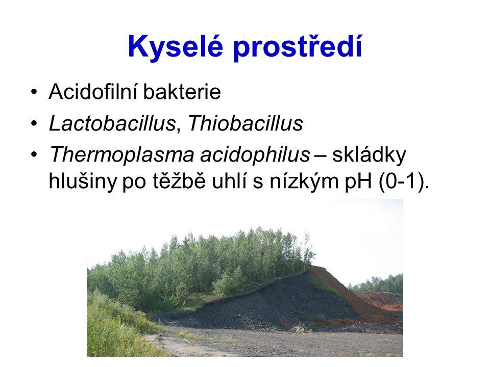 Kyselé prostředí Acidofilní bakterie Lactobacillus, Thiobacillus Thermoplasma acidophilus – skládky hlušiny po těžbě uhlí s nízkým pH (0-1).