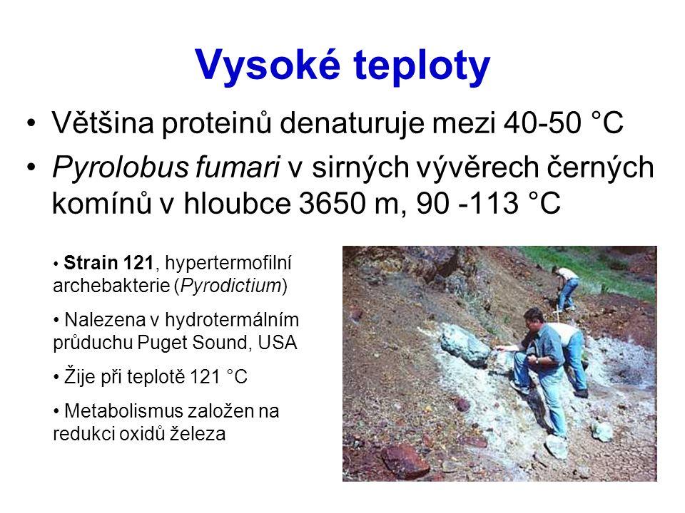 Vysoké teploty Většina proteinů denaturuje mezi 40-50 °C Pyrolobus fumari v sirných vývěrech černých komínů v hloubce 3650 m, 90 -113 °C Strain 121, h