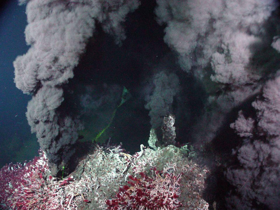 Vysoké koncentrace těžkých kovů Archebakterie a protobakterie Ferroplasma acidophilum Ralstonia solanacearum Podílely se na vzniku rudných ložisek