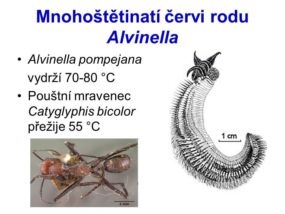 Mnohoštětinatí červi rodu Alvinella Alvinella pompejana vydrží 70-80 °C Pouštní mravenec Catyglyphis bicolor přežije 55 °C