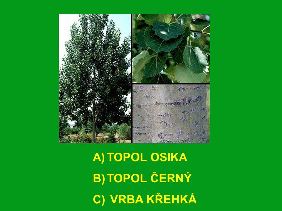 A)TOPOL OSIKA B)TOPOL ČERNÝ C) VRBA KŘEHKÁ
