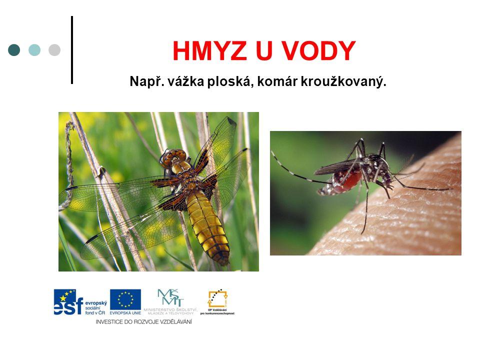 HMYZ U VODY Např. vážka ploská, komár kroužkovaný.