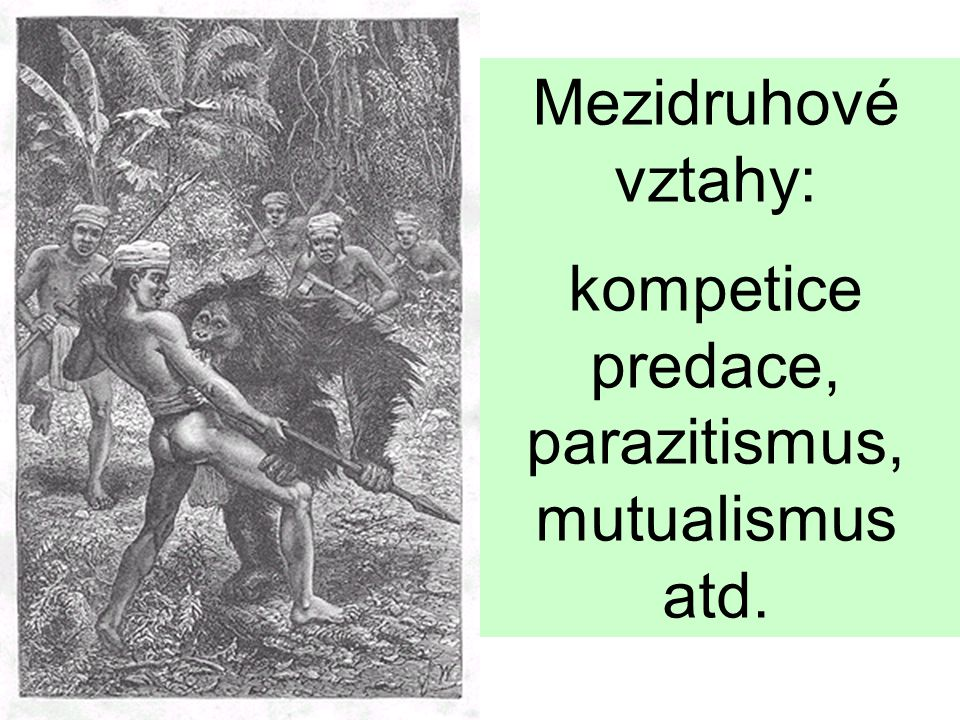 Mezidruhové vztahy: kompetice predace, parazitismus, mutualismus atd.