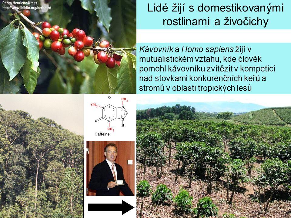 Kávovník a Homo sapiens žijí v mutualistickém vztahu, kde člověk pomohl kávovníku zvítězit v kompetici nad stovkami konkurenčních keřů a stromů v obla