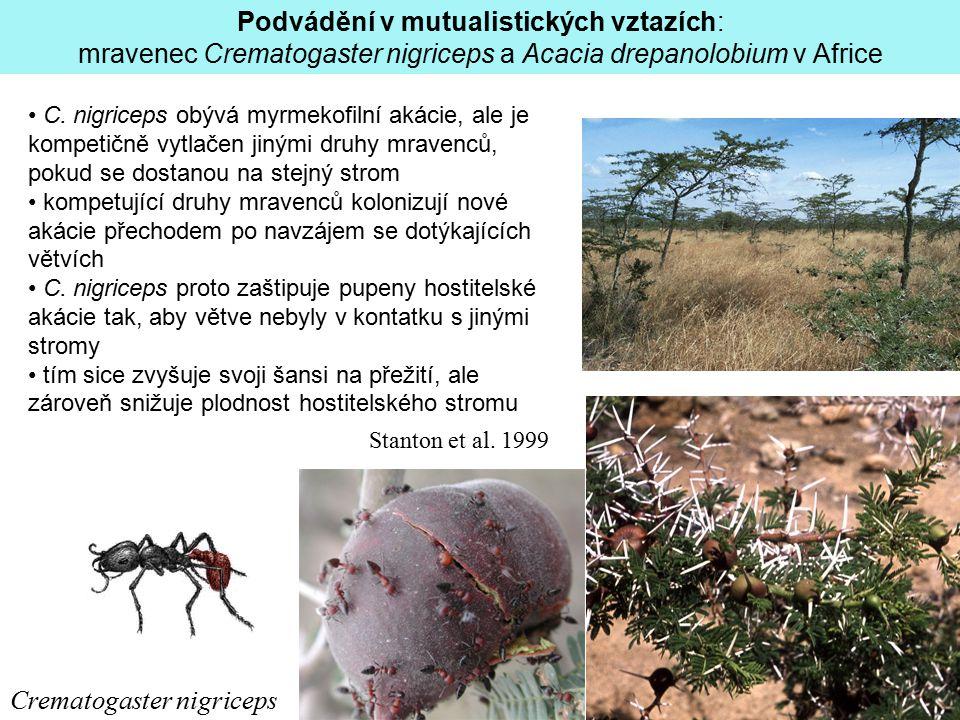 Crematogaster nigriceps Podvádění v mutualistických vztazích: mravenec Crematogaster nigriceps a Acacia drepanolobium v Africe C. nigriceps obývá myrm
