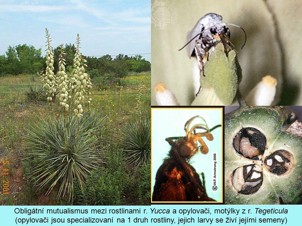 Obligátní mutualismus mezi rostlinami r. Yucca a opylovači, motýlky z r. Tegeticula (opylovači jsou specializovaní na 1 druh rostliny, jejich larvy se
