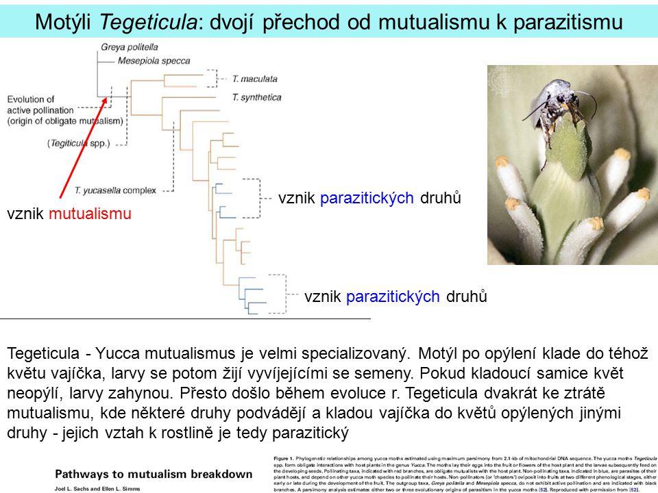 Motýli Tegeticula: dvojí přechod od mutualismu k parazitismu Tegeticula - Yucca mutualismus je velmi specializovaný. Motýl po opýlení klade do téhož k
