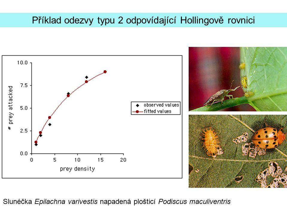 Rychlost konzumace je úpřímo úměrná biomase potravy Příklad odezvy typu 1: lumíci na jednoděložných roslinách v tundře