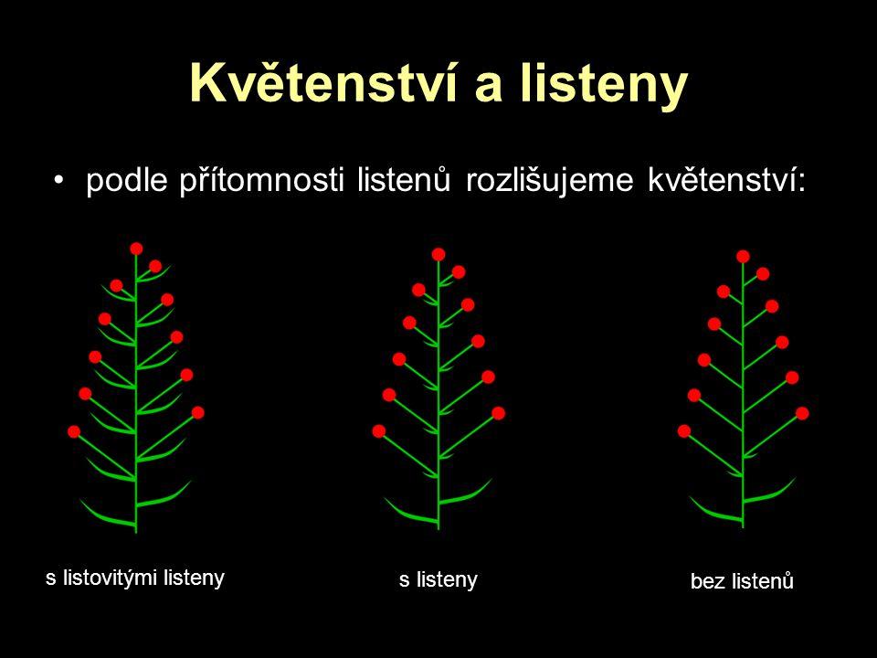 Květenství a listeny podle přítomnosti listenů rozlišujeme květenství: s listovitými listeny s listeny bez listenů