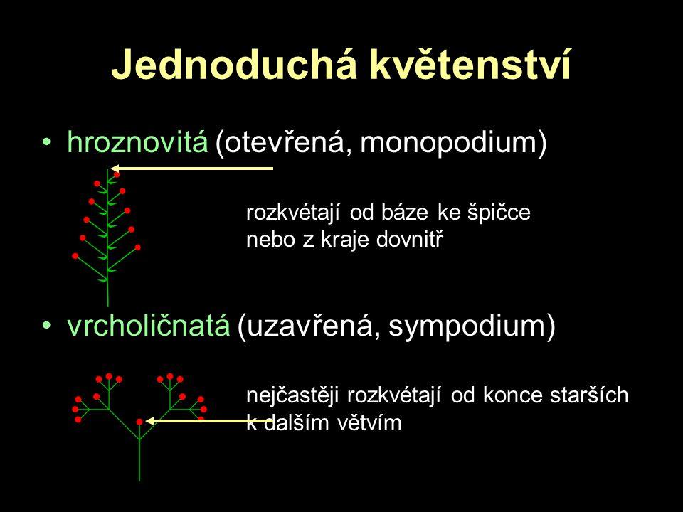 Jednoduchá květenství hroznovitá (otevřená, monopodium) rozkvétají od báze ke špičce nebo z kraje dovnitř vrcholičnatá (uzavřená, sympodium) nejčastěj