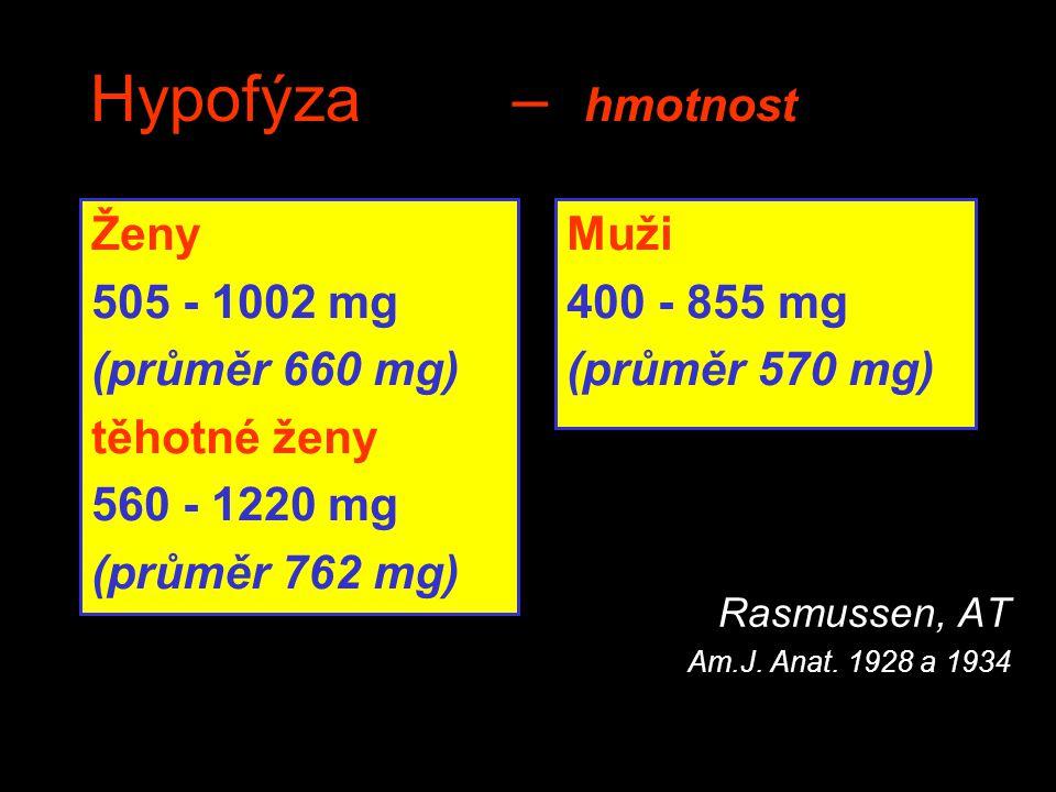 Hypofýza– hmotnost Rasmussen, AT Am.J. Anat. 1928 a 1934 Ženy 505 - 1002 mg (průměr 660 mg) těhotné ženy 560 - 1220 mg (průměr 762 mg) Muži 400 - 855