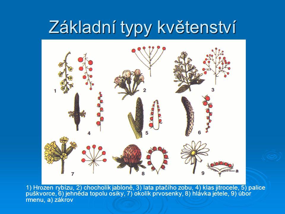 Základní typy květenství 1) Hrozen rybízu, 2) chocholík jabloně, 3) lata ptačího zobu, 4) klas jitrocele, 5) palice puškvorce, 6) jehněda topolu osiky, 7) okolík prvosenky, 8) hlávka jetele, 9) úbor rmenu, a) zákrov