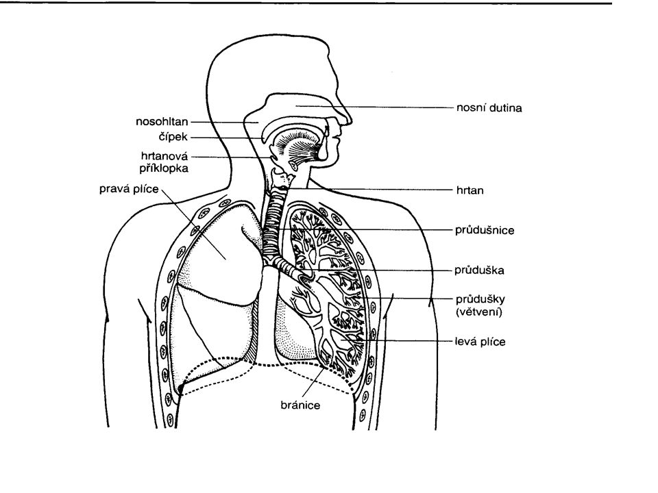 Nemoci dýchací soustavy.Chřipka – virové onemocnění dýchacích cest.