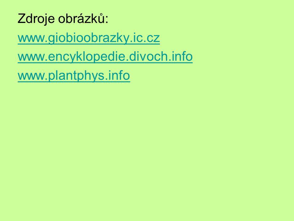 Zdroje obrázků: www.giobioobrazky.ic.cz www.encyklopedie.divoch.info www.plantphys.info