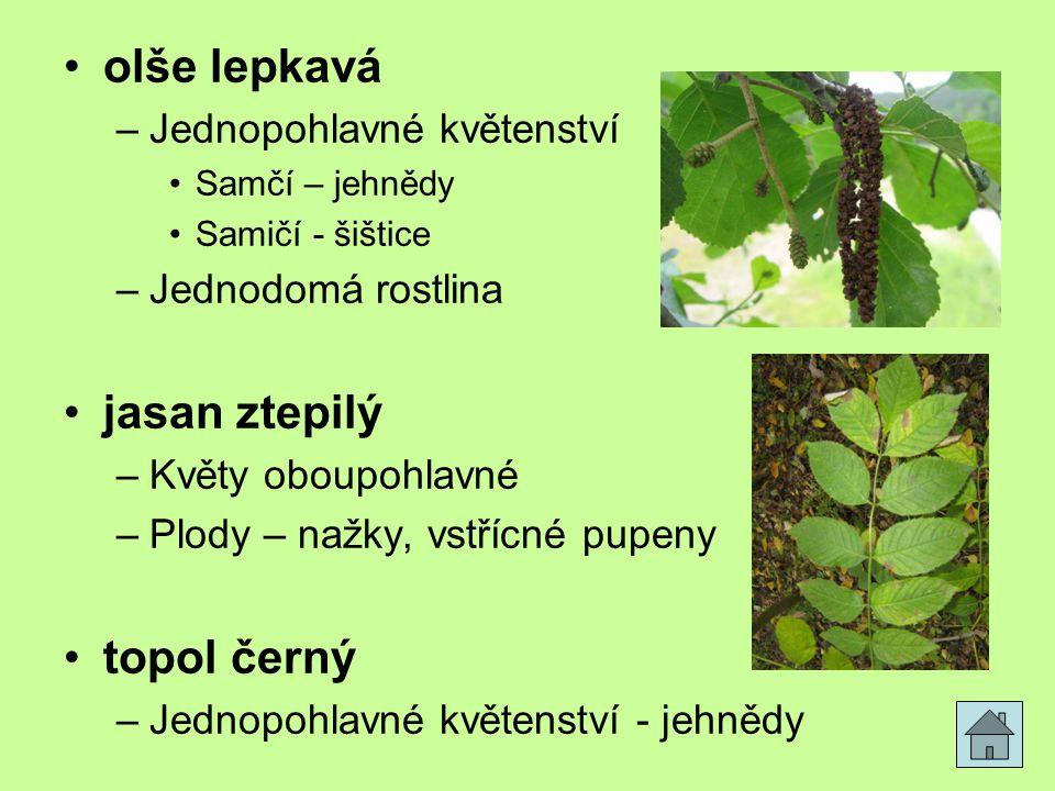 olše lepkavá –Jednopohlavné květenství Samčí – jehnědy Samičí - šištice –Jednodomá rostlina jasan ztepilý –Květy oboupohlavné –Plody – nažky, vstřícné pupeny topol černý –Jednopohlavné květenství - jehnědy