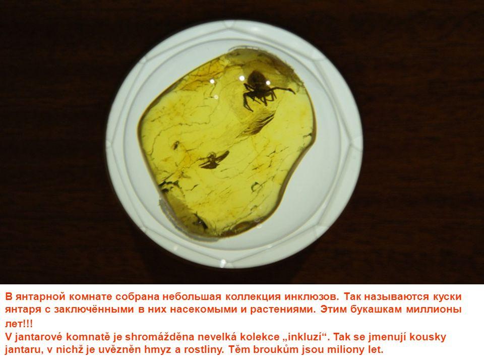 В янтарной комнате собрана небольшая коллекция инклюзов. Так называются куски янтаря с заключёнными в них насекомыми и растениями. Этим букашкам милли