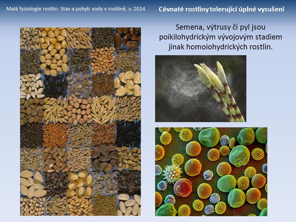 Semena, výtrusy či pyl jsou poikilohydrickým vývojovým stadiem jinak homoiohydrických rostlin. Cévnaté rostliny tolerující úplné vysušení