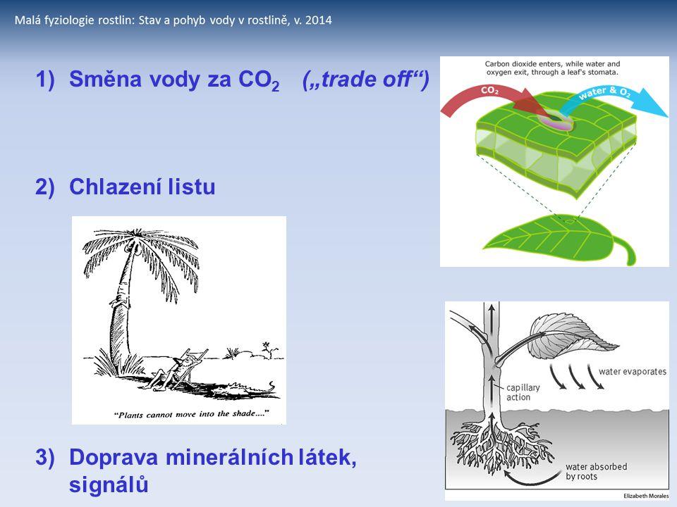 """1)Směna vody za CO 2 (""""trade off"""") 2)Chlazení listu 3)Doprava minerálních látek, signálů"""