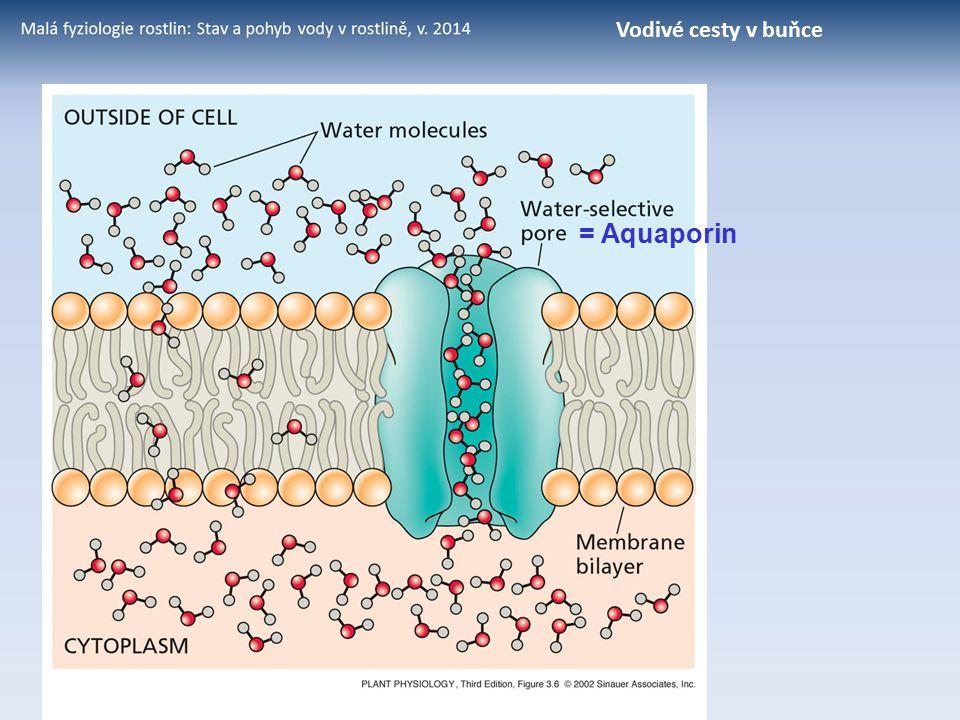 Vodivé cesty v buňce = Aquaporin