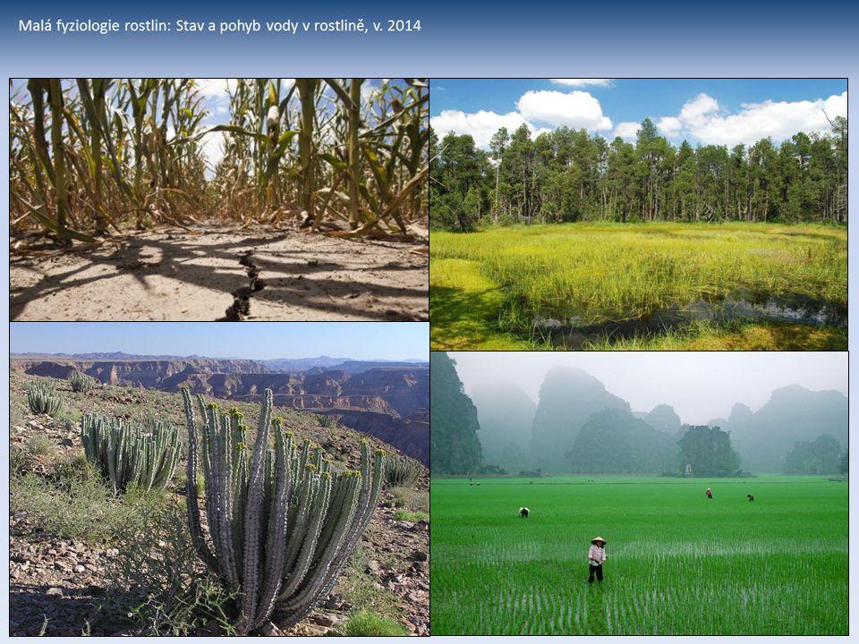 Potřeba vody rostlinami – produkce