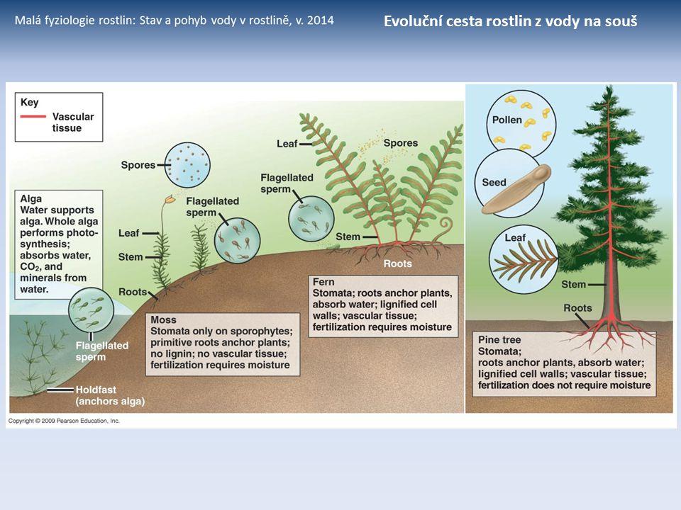 Evoluční cesta rostlin z vody na souš