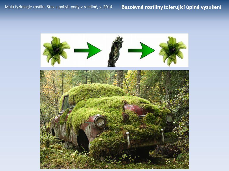 Trehalosa Haberlea rhodopensis (Gesneriaceae) – jedna z velmi mála evropských cévnatých rostlin tolerujících vysušení Cévnaté rostliny tolerující úplné vysušení