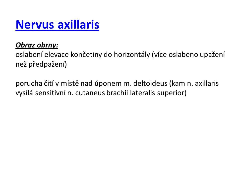 Nervus axillaris Obraz obrny: oslabení elevace končetiny do horizontály (více oslabeno upažení než předpažení) porucha čití v místě nad úponem m. delt