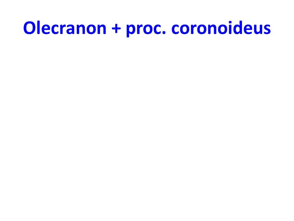 Olecranon + proc. coronoideus