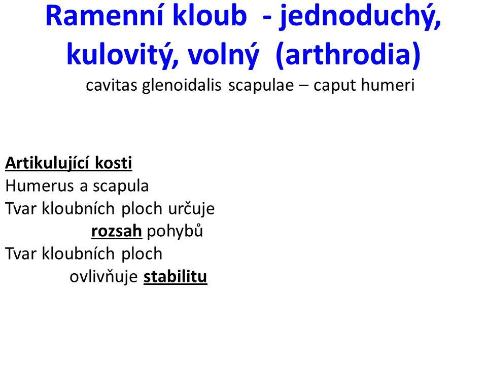 Ramenní kloub - jednoduchý, kulovitý, volný (arthrodia) cavitas glenoidalis scapulae – caput humeri Artikulující kosti Humerus a scapula Tvar kloubníc