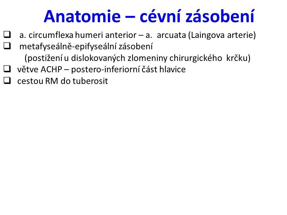 Anatomie – cévní zásobení  a. circumflexa humeri anterior – a. arcuata (Laingova arterie)  metafyseálně-epifyseální zásobení (postižení u dislokovan