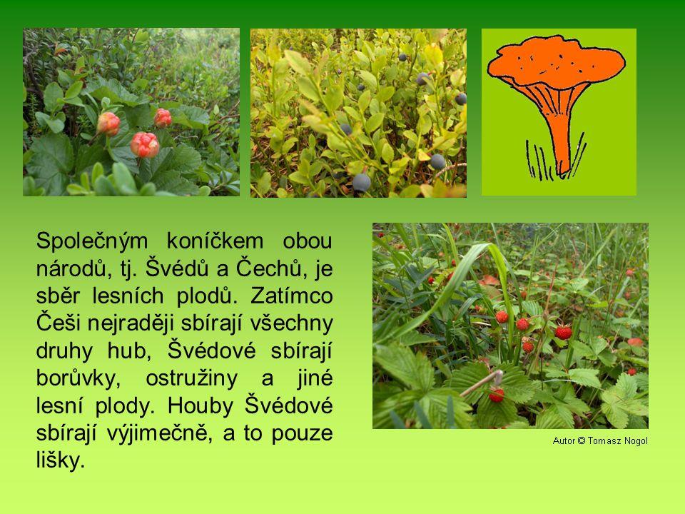 Společným koníčkem obou národů, tj.Švédů a Čechů, je sběr lesních plodů.
