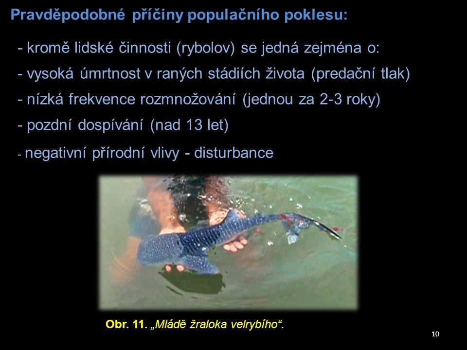 10 Pravděpodobné příčiny populačního poklesu: - kromě lidské činnosti (rybolov) se jedná zejména o: - vysoká úmrtnost v raných stádiích života (predač