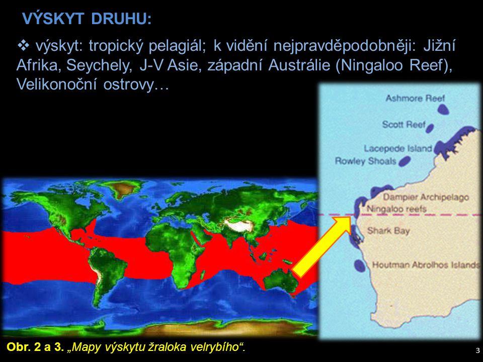  výskyt: tropický pelagiál; k vidění nejpravděpodobněji: Jižní Afrika, Seychely, J-V Asie, západní Austrálie (Ningaloo Reef), Velikonoční ostrovy… Ob