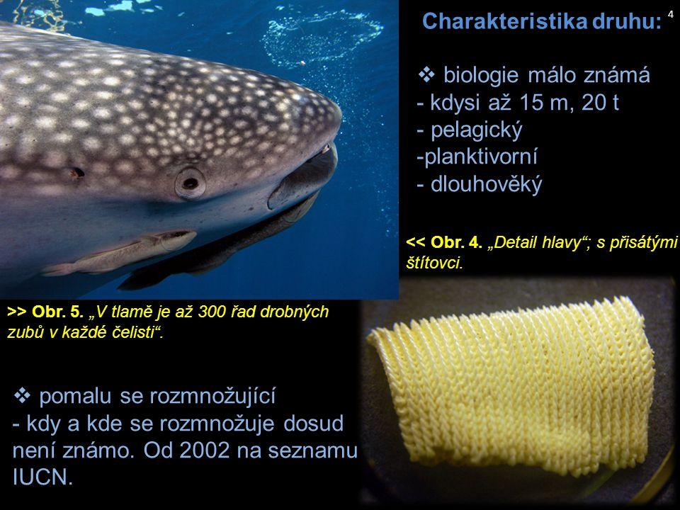 http://www.jeffsmoz.com/fauna  pomalu se rozmnožující - kdy a kde se rozmnožuje dosud není známo. Od 2002 na seznamu IUCN.  biologie málo známá - kd