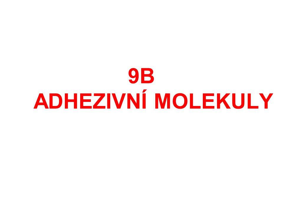 9B ADHEZIVNÍ MOLEKULY
