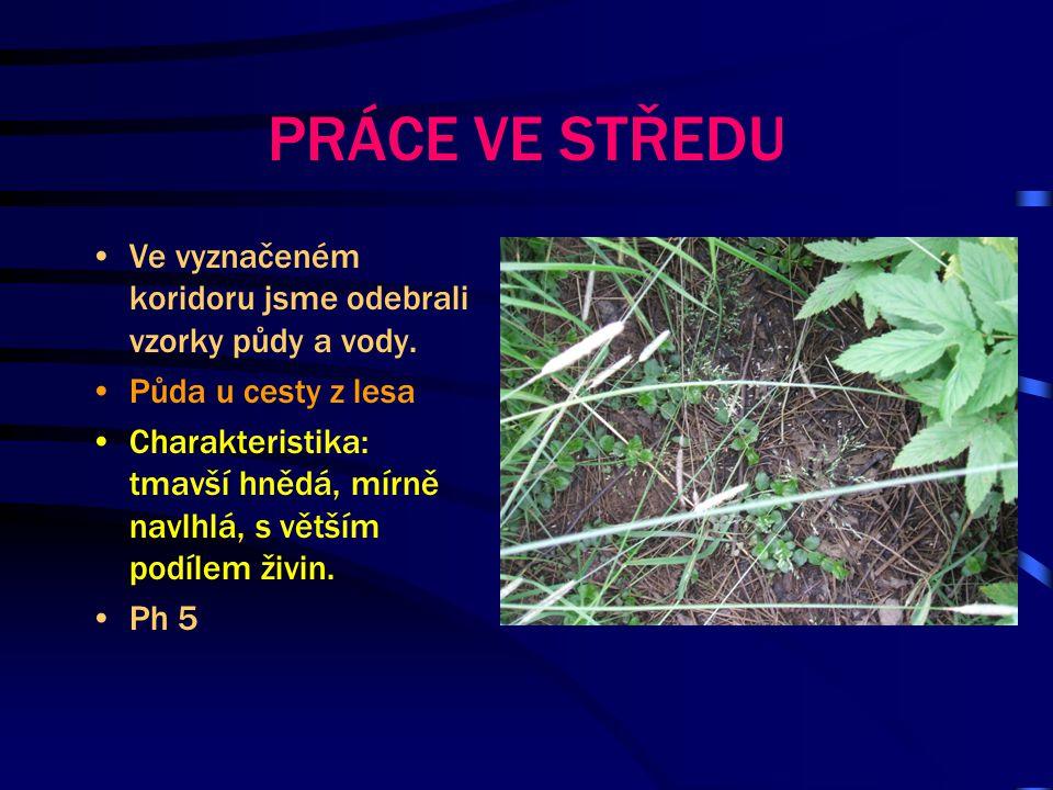 Půda u krmelce směr Cheznovice Charakteristika: sitě hnědá až černá, vě tší množství mechu, velké množství živin.