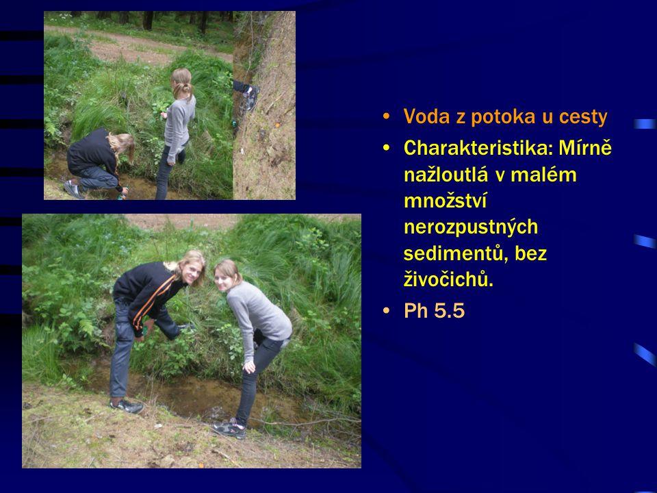 Voda z potoka u cesty Charakteristika: Mírně nažloutlá v malém množství nerozpustných sedimentů, bez živočichů.