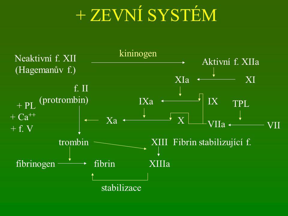 + ZEVNÍ SYSTÉM Neaktivní f. XII (Hagemanův f.) Aktivní f. XIIa kininogen XIXIa IXIXa XXa VII VIIa TPL f. II (protrombin) trombin + PL + Ca ++ + f. V f