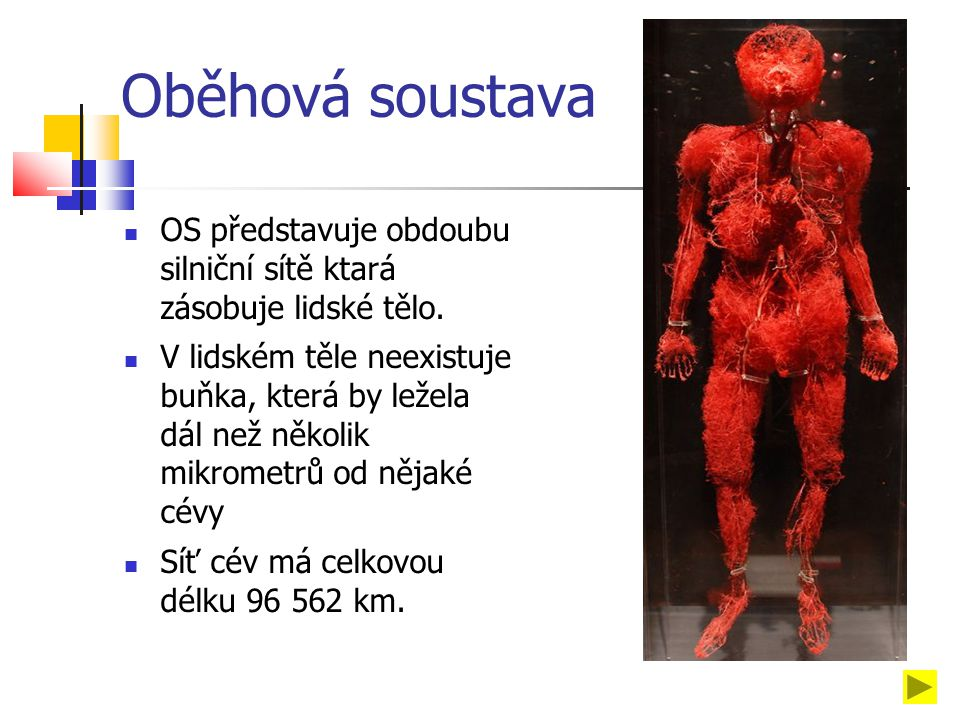 Oběhová soustava OS představuje obdoubu silniční sítě ktará zásobuje lidské tělo.