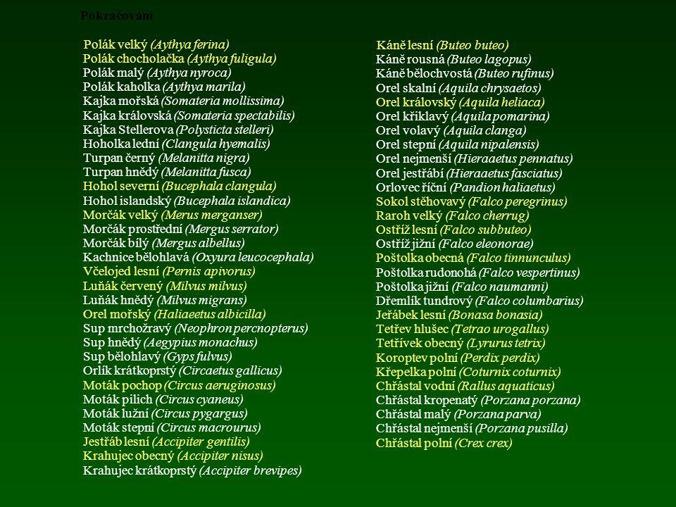 Ptáci zjištění ve volné přírodě na území ČR Kategorie A (druhy pozorované alespoň jednou po roce 1950 včetně) Potáplice severní (Gavia arctica) Potápl