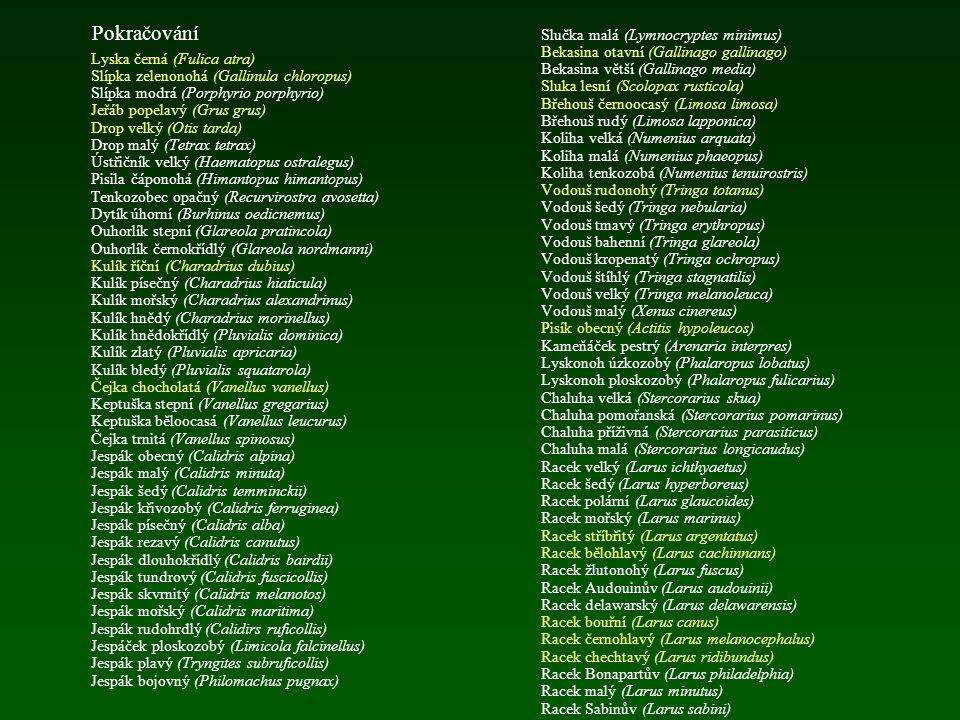Pokračování Polák velký (Aythya ferina) Polák chocholačka (Aythya fuligula) Polák malý (Aythya nyroca) Polák kaholka (Aythya marila) Kajka mořská (Som
