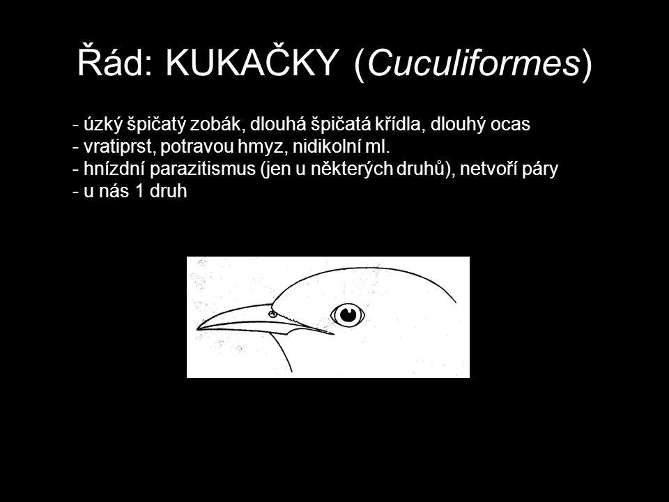 Řád: KUKAČKY (Cuculiformes) - úzký špičatý zobák, dlouhá špičatá křídla, dlouhý ocas - vratiprst, potravou hmyz, nidikolní ml. - hnízdní parazitismus