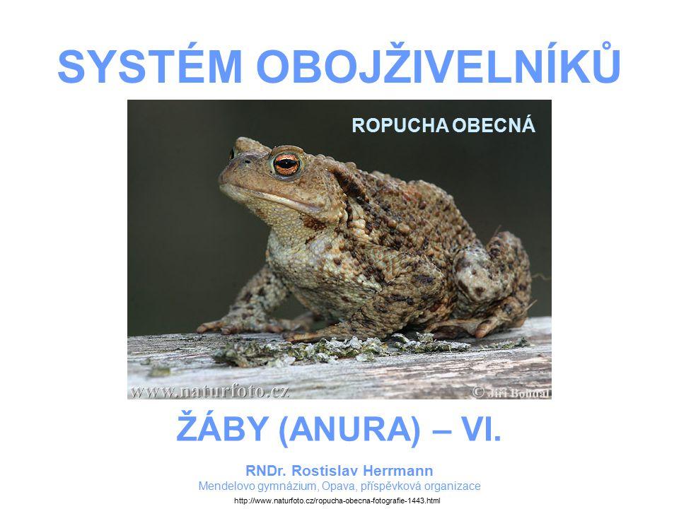 SYSTÉM OBOJŽIVELNÍKŮ RNDr.